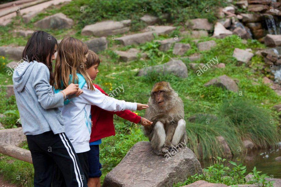 La Montagne des singes